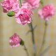花の貰い物