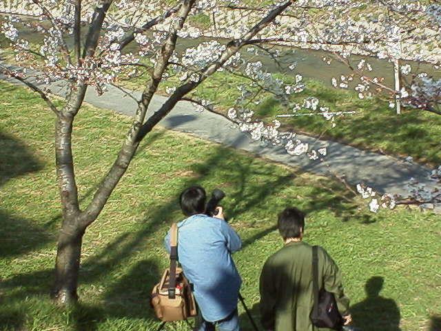 桜と城を撮る人